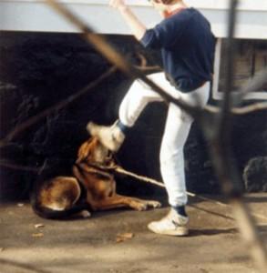maus tratos com os animais